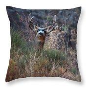 Grand Canyon Deer Throw Pillow