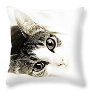 Grand Kitty Cuteness 3 High Key Throw Pillow