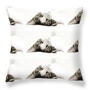 Grand Kitty Cuteness Bw 9 Throw Pillow