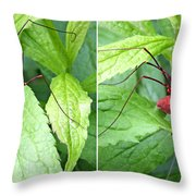 Granddaddy Spider In 3d Stereo Throw Pillow