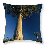 Grandidiers Baobab Trees Madagascar Throw Pillow