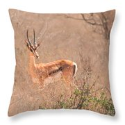 Grant's Gazelle Nanger Granti Throw Pillow