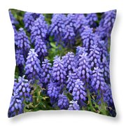 Grape Hyacinth At Thanksgiving Point - 1 Throw Pillow
