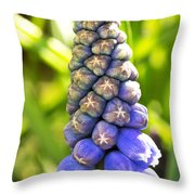 Grape Hyacinth Closeup Throw Pillow by Jane Rix