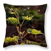 Grape Leaf In Morning Time Throw Pillow