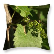 Grape Vine In Spring Throw Pillow