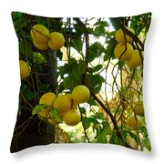 Grapefruits Throw Pillow