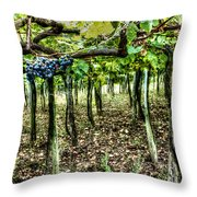 Grapes On A Vineyard Throw Pillow