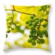 Grapes On The Vine - Finger Lakes Vineyard Throw Pillow