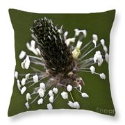 Grass Bloom Throw Pillow