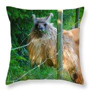 Grass Is Always Greener - Llama Throw Pillow by Jordan Blackstone