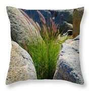 Grasses In Oasis On Borrego Palm Canyon Trail In Anza-borrego Desert Sp-ca Throw Pillow