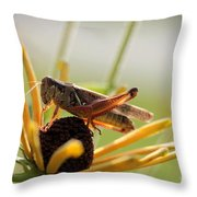Grasshopper Antenna Down Throw Pillow