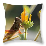 Grasshopper Delight Throw Pillow