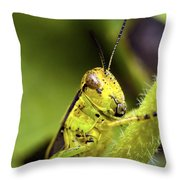 Grasshopper Macro 9402 Throw Pillow
