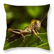 Grasshopper Macro Throw Pillow