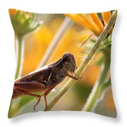 Grasshopper On Coneflower Stem Throw Pillow