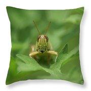 Grasshopper Portrait Throw Pillow