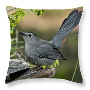 Gray Catbird Drinking Throw Pillow