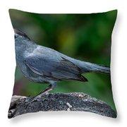 Gray Catbird Dumetella Carolinensis Throw Pillow