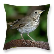 Gray-cheeked Thrush Catharus Minimus Throw Pillow
