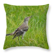 Gray-eyed Catbird II Throw Pillow