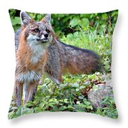 Gray Fox Throw Pillow