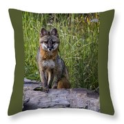 Gray Fox Posing Throw Pillow