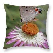 Gray Hairstreak And Straw Flower Throw Pillow