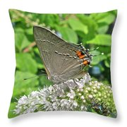 Gray Hairstreak Butterfly - Strymon Melinus Throw Pillow