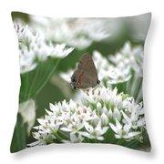 Gray Hairstreak On White Blossoms Throw Pillow