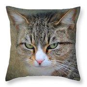 Gray Tabby Cat Throw Pillow by Jai Johnson