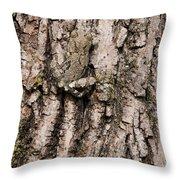 Gray Tree Frog Throw Pillow
