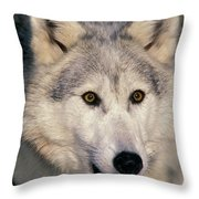 Gray Wolf Canis Lupus, Minnesota Throw Pillow