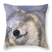Gray Wolf Canis Lupus Shaking Snow Off Throw Pillow