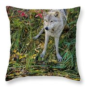 Gray Wolf Drinking Throw Pillow
