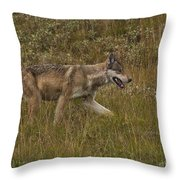 Gray Wolf Hunting Throw Pillow