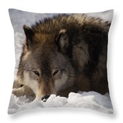 Gray Wolf In Snow Throw Pillow