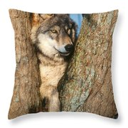 Gray Wolf In Tree Canis Lupus Throw Pillow