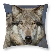Gray Wolf Portrait Throw Pillow