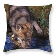 Gray Wolf Pup Endangered Species Wildlife Rescue Throw Pillow