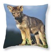 Gray Wolf Pup Montana Throw Pillow