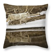 Gray Wolf Reflection Throw Pillow