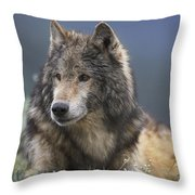 Gray Wolf Resting North America Throw Pillow