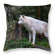 Gray Wolf White Morph Throw Pillow