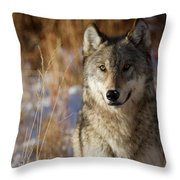 Gray Yearling Throw Pillow