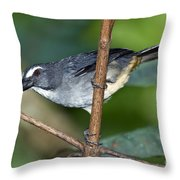 Grayish Saltator Throw Pillow