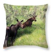 Grazing Along Throw Pillow