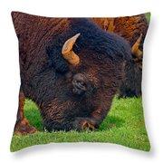 Grazing Buffaloes Throw Pillow
