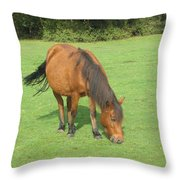 Grazing Chestnut Pony Throw Pillow